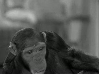 Tarzans jauns york adventure (1942)