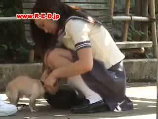 Dog cam